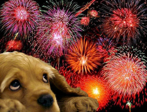 Fireworks Frighten Many Animals